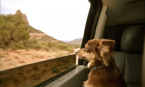 Taking Pets to Mexico